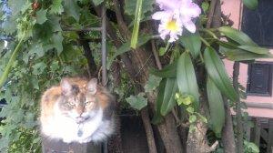 morphy e a flor